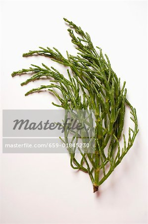 Marsh samphire on white background Stock Photo - Premium Royalty-Free, Image code: 659-01845230