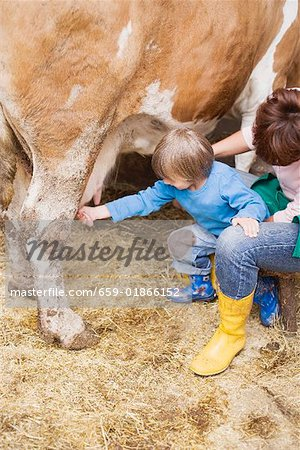 Cow being milked Stock Photo - Premium Royalty-Free, Image code: 659-01866152