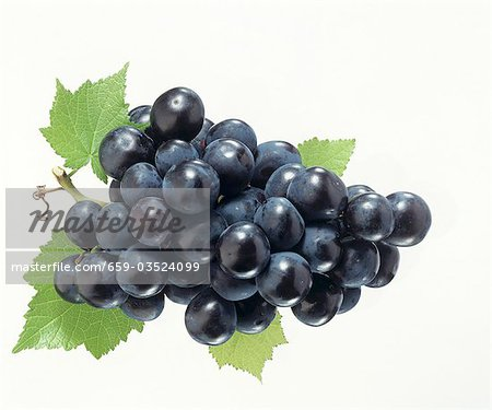 Black grapes with vine leaves Stock Photo - Premium Royalty-Free, Image code: 659-03524099