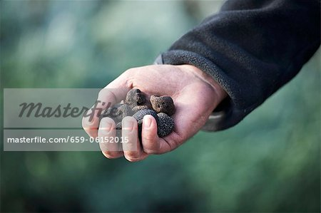 A hand holding black truffles Stock Photo - Premium Royalty-Free, Image code: 659-06152015