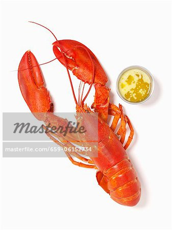Whole Steamed Lobster with Melted Butter; From Above; White Background Stock Photo - Premium Royalty-Free, Image code: 659-06152734