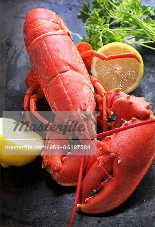 Cooked lobster with lemon Stock Photo - Premium Royalty-Free, Image code: 659-06187384