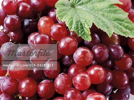 Red grapes (detail) Stock Photo - Premium Royalty-Free, Image code: 659-06187813