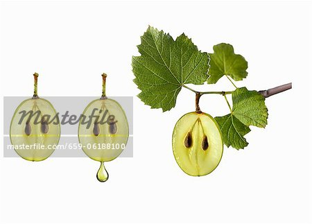 Symbol for grape seed oil Stock Photo - Premium Royalty-Free, Image code: 659-06188100