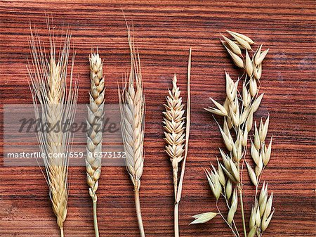 Various ears of grain on a wooden surface Stock Photo - Premium Royalty-Free, Image code: 659-06373132