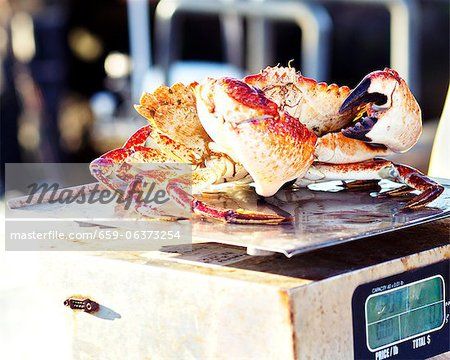 Live Rock Crab on a Scale Stock Photo - Premium Royalty-Free, Image code: 659-06373254