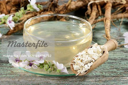 Marsh mallow root tea, roots and flowers Stock Photo - Premium Royalty-Free, Image code: 659-06495782