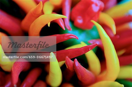 An assortment of colourful chilli peppers (close-up) Stock Photo - Premium Royalty-Free, Image code: 659-06671497