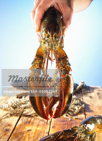 Hand holding a lobster Stock Photo - Premium Royalty-Free, Image code: 659-06902544