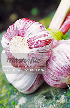A bunch of garlic cloves tied together with green raffia Stock Photo - Premium Royalty-Free, Image code: 659-06903136