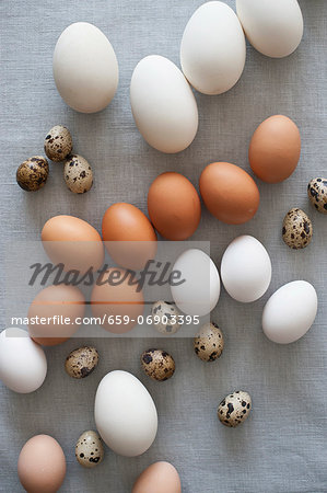 Various kinds of eggs Stock Photo - Premium Royalty-Free, Image code: 659-06903395
