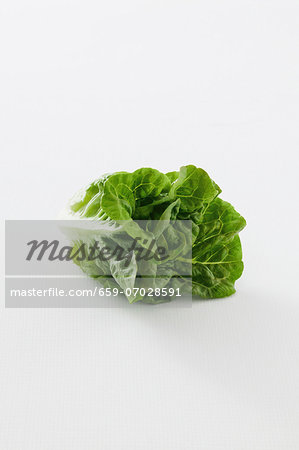 A romaine lettuce against a white background Stock Photo - Premium Royalty-Free, Image code: 659-07028591