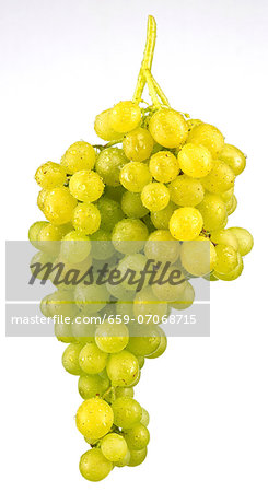 Green grapes Stock Photo - Premium Royalty-Free, Image code: 659-07068715