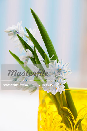 Spring flowers in a yellow vase Stock Photo - Premium Royalty-Free, Image code: 659-07069385