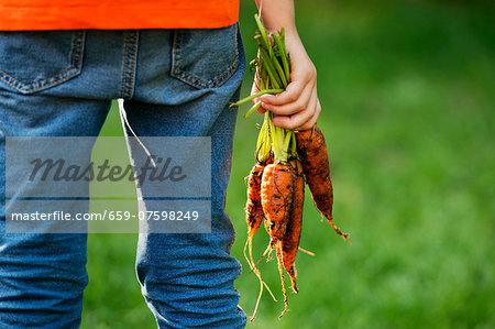 A child holding freshly harvested carrots Stock Photo - Premium Royalty-Free, Image code: 659-07598249