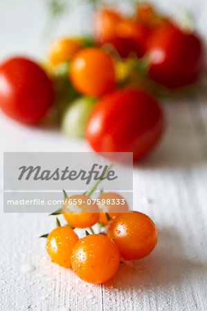 Assorted tomatoes on a white-painted wooden table Stock Photo - Premium Royalty-Free, Image code: 659-07598333