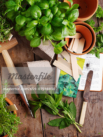 Basil, mint and rosemary with garden utensils Stock Photo - Premium Royalty-Free, Image code: 659-07598830