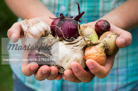 A girl holding various types of self-harvested onions and garlic Stock Photo - Premium Royalty-Free, Image code: 659-07959384