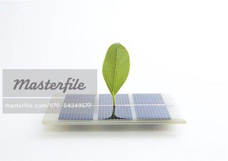Solar panels and leaf