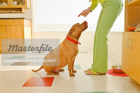Woman scolding dog Stock Photo - Premium Royalty-Free, Image code: 673-02143647
