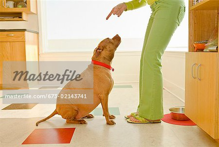 Woman scolding dog Stock Photo - Premium Royalty-Free, Image code: 673-02143741