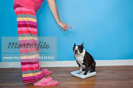 Woman looking at dog sitting on scales Stock Photo - Premium Royalty-Free, Image code: 673-06025326