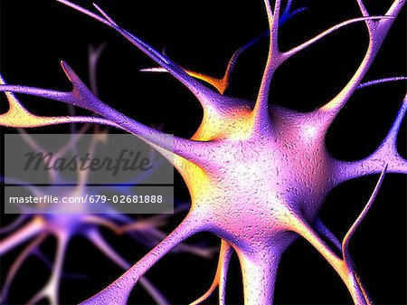 Nerve cells. Computer artwork of nerve cells, or neurons. Stock Photo - Premium Royalty-Free, Image code: 679-02681888