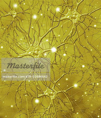 Nerve cells. Computer artwork of nerve cells, or neurons. Stock Photo - Premium Royalty-Free, Image code: 679-02684642