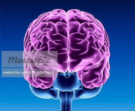 Real Healthy Human Brain