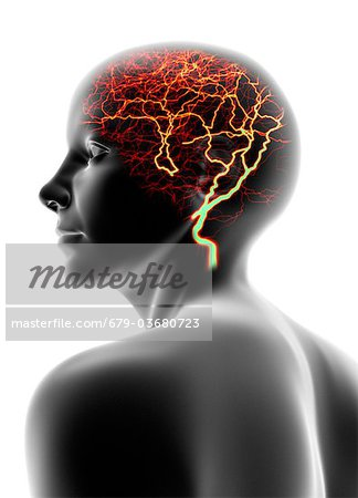 Conceptual computer artwork of a female head that could be used to depict headache, epilepsy or migraine. Stock Photo - Premium Royalty-Free, Image code: 679-03680723