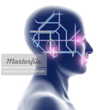 Head with network diagram Stock Photo - Premium Royalty-Free, Image code: 679-04250520