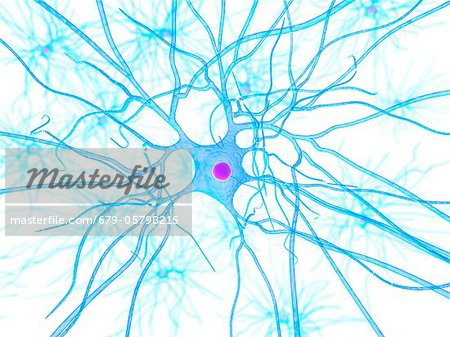 Nerve cell, artwork Stock Photo - Premium Royalty-Free, Image code: 679-05798215
