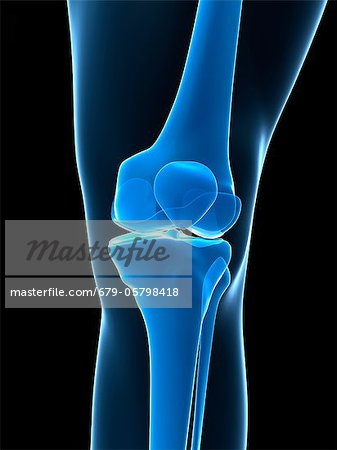 Knee bones, artwork Stock Photo - Premium Royalty-Free, Image code: 679-05798418