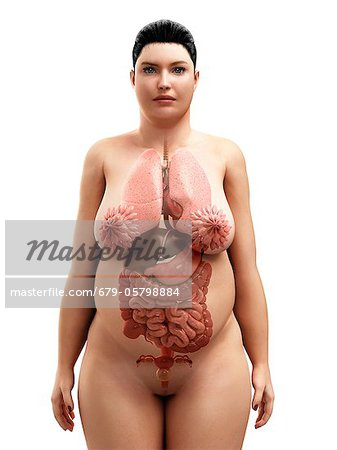 Obese woman's organs, artwork Stock Photo - Premium Royalty-Free, Image code: 679-05798884