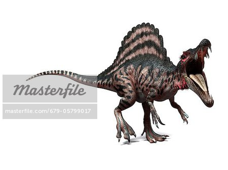 Spinosaurus dinosaur, artwork Stock Photo - Premium Royalty-Free, Image code: 679-05799017