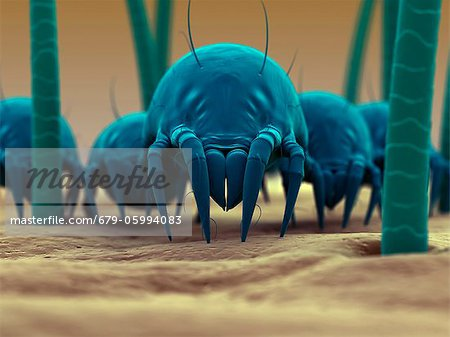 Dust mite. Computer artwork of a house dust mite (Dermatophagoides pteronyssinus) on human skin. Stock Photo - Premium Royalty-Free, Image code: 679-05994083