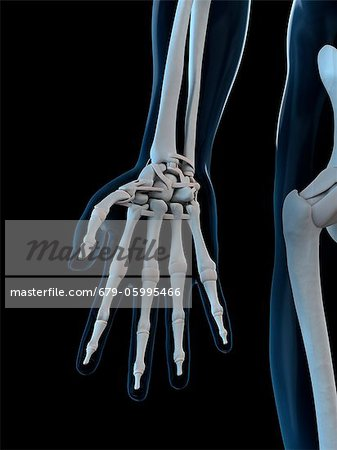 Hand bones, computer artwork. Stock Photo - Premium Royalty-Free, Image code: 679-05995466