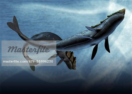Leviathan sea monsters, computer artwork. Stock Photo - Premium Royalty-Free, Image code: 679-05996230