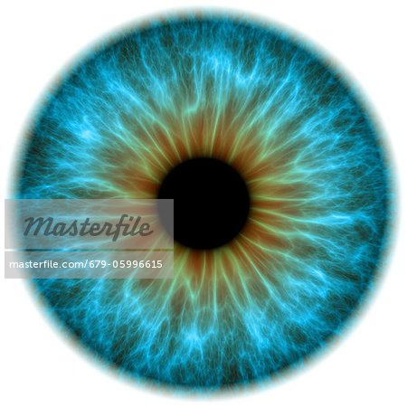 Blue eye. Computer artwork of a close-up of the iris and pupil of an eye. The iris, a coloured muscular ring, regulates the amount of light that enters the eye through the pupil (black). Stock Photo - Premium Royalty-Free, Image code: 679-05996615
