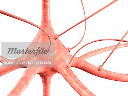 Neuron and synapses, computer artwork Stock Photo - Premium Royalty-Free, Image code: 679-06198328