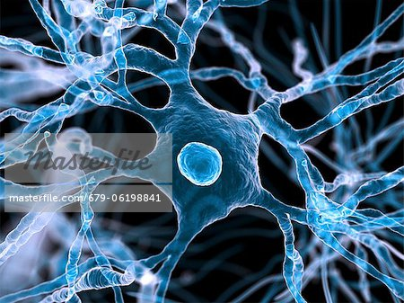 Nerve cells, computer artwork. Stock Photo - Premium Royalty-Free, Image code: 679-06198841