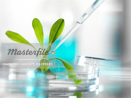 Plant research, conceptual image. Stock Photo - Premium Royalty-Free, Image code: 679-06199083
