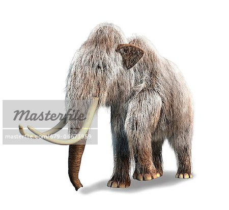 Woolly mammoth (Mammuthus primigenius), computer artwork. Stock Photo - Premium Royalty-Free, Image code: 679-06673959