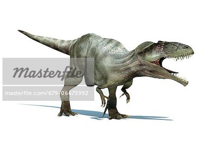 Giganotosaurus dinosaur, artwork. This dinosaur was one of the largest predatory dinosaurs, living around 110-100 million years ago in the Cretaceous Period. Fossil remains have been discovered in Argentina. It could reach over 14 metres in length and weigh over 8 tonnes. Stock Photo - Premium Royalty-Free, Image code: 679-06673992