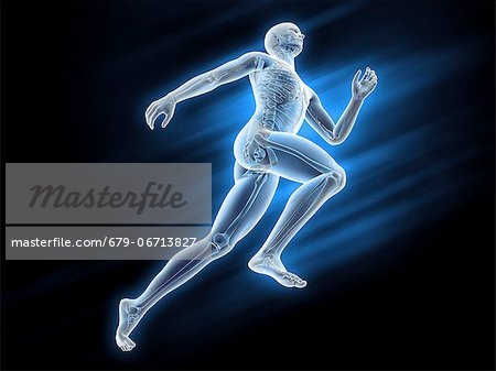 Human skeleton, computer artwork. Stock Photo - Premium Royalty-Free, Image code: 679-06713827