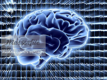 Brain activity. Computer artwork of EEG (electroencephalogram) traces superimposed over a brain illustration. An EEG records the brain's activity. Stock Photo - Premium Royalty-Free, Image code: 679-06713867