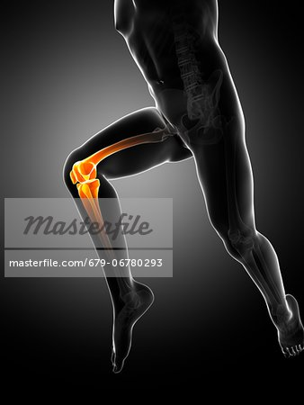 Knee pain, conceptual computer artwork. Stock Photo - Premium Royalty-Free, Image code: 679-06780293