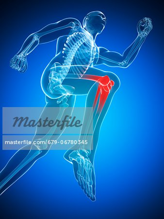 Knee pain, conceptual computer artwork. Stock Photo - Premium Royalty-Free, Image code: 679-06780345