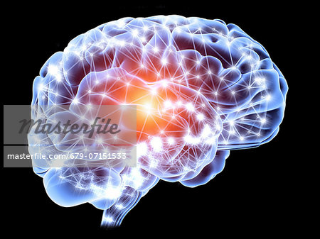 Neural network. Computer artwork of a brain in side view, with the brain's neural network represented by lines and flashes. A neural network is made up of nerve cells (neurons). Stock Photo - Premium Royalty-Free, Image code: 679-07151533