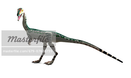Coelophysis dinosaur, computer artwork. Stock Photo - Premium Royalty-Free, Image code: 679-07603739